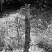 Good Fences Make Good Neighbours  /  Vieille barrière