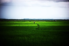 VIGNETTE ME ! (N A Y E E M) Tags: boy field paddy rice green sky monsoon street ukhia coxsbazaar bangladesh carwindow