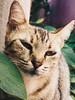 DSCF6450 (raulguilherme1) Tags: cat dog sky barbecue naninha photo photography los angeles eu tu nós blue green red purple orange good god feed instagram insta vsco afterlight photoshop