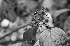 (hey ~ it's me lea) Tags: hmbt seeds autumn fall leaves