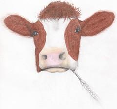 Cool cow (Klaas van den Burg) Tags: cow realism funny humor friesekoe color pencil littledoglaughedstories
