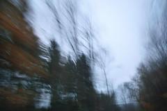 Tree waves. Leaving the Harz. (Gudzwi) Tags: autofahrt driving movement bäume trees freetheme 7dwf mountains harz icm intentionalcameramovement intentionalblur blur motionblur motion bewegungsunschärfe bewegung