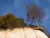 Chalk cliffs, Rügen (unukorno) Tags: sassnitz mecklenburgvorpommern deutschland rügen chalkcliffs kreideküste kreidefelsen landscape landschaft bäume trees sky