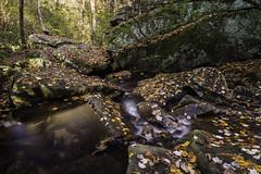 Azalea Cascade (Longleaf.Photography) Tags: azalea cascade fall autumn desoto park al leaves stream mentone fortpayne