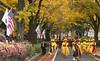 US_President_Trump_CheongWaDae_07 (KOREA.NET - Official page of the Republic of Korea) Tags: 한국 청와대 미국 대통령 미국대통령 트럼프 트럼프대통령 비스트 서울 seoul korea cheongwadae uspresidenttrump 국빈방문 us 캐딜락원 cadillacone