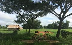 Myanmar, Yangon Region, Northern District, Hlegu Township, Hpaung Gyi Village Tract (Die Welt, wie ich sie vorfand) Tags: myanmar burma yangon rangoon bicycle cycling surly crosscheck yangonregion northerndistrict hlegutownship hlegu hpaunggyi