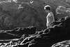 Rocking It (Scriblerus) Tags: rocks coast lowtide rimlight morrobay california blackandwhite bw
