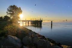 Fraser River Sunrise (PiscesDreamer) Tags: dykeroad fraserriver morning fall autumn sunrise mist river pier dock britishcolumbia canada steveston birds seagull
