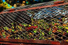Roasting Green Chiles (richardzx) Tags: greenchile albuquerque richardzx