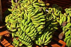 Donkey Bananas (David K. Edwards) Tags: banana donkey market havana cuba burp green ripe delicious