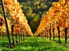 into deep (almresi1) Tags: weinstadt beutelsbach weinberg vineyard trees wald bäume forest wood reihe lines herbst fall remstal autumn colours bunt