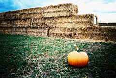 mju - pumpkin farm (johnnytakespictures) Tags: olympus mju mju1 automatic lomo lomography xprochrome100 crossprocess crossprocessed film analogue expiredfilm expired foxes farm essex basildon pumpkin patch autumn autumnal orange hay bale bales wall agriculture agricultural farming