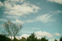Cambio de temporada (Luis A. Hernández S.) Tags: sky clouds tree trees lumix silkypix nik wind windy