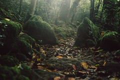 Chaos of the rocks. (Seiko Cat's) Tags: wood forest nature stones rocks landscape wild autumn chaos