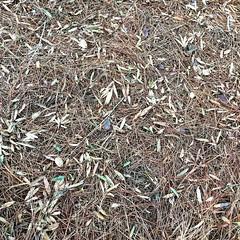 Georgia Pine Carpet