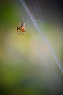 Petite araignée