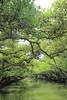 一眼台南 A Glimpse of Tainan (tsubasa8336) Tags: tainan taiwan 台湾 台南 写真 寫真 四草 綠色隧道 green 緑