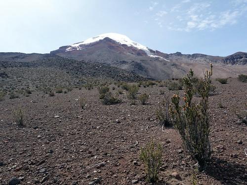 Chimborazo and chuquiragua