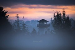 Fall Lookout (jeanmarie's photography) Tags: mist foggy serene washingtonstate nature nikond810 nikon sky clouds sunrise moody morning jeanmarie jeanmarieshelton tower lookout