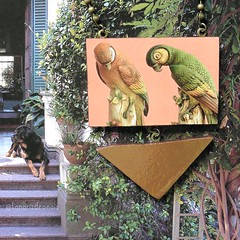 Loros Vintage Parrots
