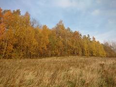 Góry Wałbrzyskie (nesihonsu) Tags: autumn jesienny jesień góry górywałbrzyskie sudety sudetes sudeten mountains lowersilesia dolnyśląsk natureofpoland przyrodapolska landscape krajobraz poland polska październik boguszówgorce podchełmiec birch birches brzozy yellow