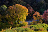 Fall Colors/Golden Hour (photo61guy) Tags: utah autumn outdoors autumncolors fallcolors fallfoliage fall goldenhour sunset nikond7000 nature landscape leaves coloredleaves wasatchfront wasatch platinumheartaward