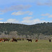 Teton - Horses Meadow