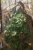 171008 - 29 - Nomaglio - Museo Castagna (mastino70) Tags: nikon d80 ag 2017 italia italy piemonte piedmont nomaglio ecomuseo castagna chestnut museum