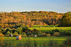 hay and hills (brown_theo) Tags: vinton county zaleski ohio hay autumn trees fall foliage stateroute677