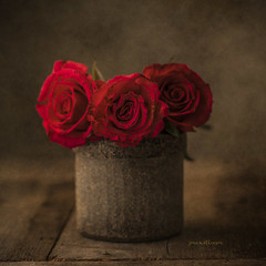 Red Roses (jm atkinson) Tags: rose red joanmatkinson stilllife d700 jaijohnsontexture vase warm 7dwf flora