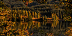 A Golden Frame (Adam West Photography) Tags: achray adamwest alpine autumngold conifer drunkie fir forrest framing gold green highlands lake leaves loch mirror oak perfect reflections scotland spruce still trossachs uk