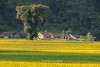 _29A08120917.QL3.Nguyễn Huệ.Hòa An.Cao Bằng (hoanglongphoto) Tags: asia asian vietnam northvietnam northeastvietnam landscape scenery vietnamlandscape vietnamscenery vietnamscene caobanglandscape field ricefields harvest harvestingseason afternoon sunlight sunny sunnyafternoon village house homes tree flanksmountain canon canoneos5dsr canonef70200mmf28lisiiusmlens đôngbắc caobằng hòaan nguyễnhuệ ql3 phongcảnh phongcảnhcaobằng bảnlàng nhà nhữngngôinhà buổichiều cánhđồng lúachín mùagặt nắng nắngchiều caobằngmùalúachín caobằngmùagặt sườnnúi cây countryside nôngthôn countrysideinvietnam mountainousvillageinthevietnam