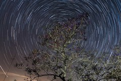 Day 285-365: Dream big [Explore] (LivingStone Images) Tags: 12oct17 2017 365the2017edition 3652017 day285365 jacaranda night objects sky startrails stars timelapse tree vegetation werehere