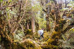 Gocha-la trek in Sikkim, India (David Ducoin) Tags: asia dzongri forest gochala hike himalaya india kangchenjunga nationalpark porter rhododendrontree rodhodendrons sikkim trek working gangtok in
