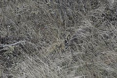 High grass. (janrs7) Tags: highgrass autumn grass europeanroedeer roedeer wildnature norge norway october tamron70300mm