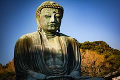 Kamakura Daibutsu (tokyobogue) Tags: japan kamakura kanagawa nikon nikond7100 d7100 35mmf18g trees green shrine old architecture religion daibutsu buddha kamakuradaibutsu bigbuddha statue kotokuin