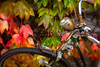 NSU and Ivy (suzanne~) Tags: bicycle bike 100bicycles lensbaby composerpro softfocusoptic f56 leaves autumn fall nsu logo oldtimer