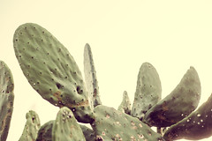 prickly [Day 3206]