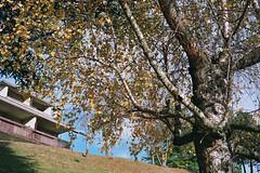 _21_00108 (somchaimilano) Tags: canon canonet giii ql17 40mm 17 fuji superia 200 color negative film rangefinder tlemetro 4017 nature autumn italy mountains foliage autunno colori montagna foglie fiori trees pellicola