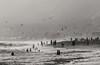 Zuma Beach 2 (Robert Borden) Tags: seagulls silhouette wet waves zuma malibu socal la losangeles california cali westcoast us usa northamerica canonusa canonphotos