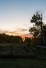Autumn Sunset, Gate (Matt 23998) Tags: autumn poplars sunset forest trees fenceline beausejour gate poplar fall manitoba fence