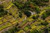 Terraced vineyard in Cinque Terre, Liguria (serbosca) Tags: autumn vineyard liguria italy landscape vigneto natura cinque terre nikon d90 verde green yellow hill grape view panorama splendor