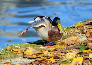 Stretching de canard :-)