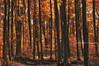A World with Octobers (Andrea Kollo Photography) Tags: nature naturephotography natureartprints fineart fineartphoto fineartprints natureasart artforms andreakollo andreakollophotographer andreakollophotography artphotography countryside landscape sceniclandscape ruralontario autumn autumncolors autumncolours autumnimpressions fallcolors fallcolours hiking hikingtrail hikingtrails fallhiking georgiantriangle collingwood