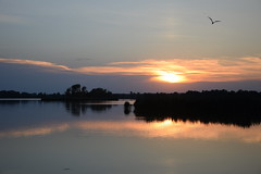 summer moods (JoannaRB2009) Tags: summer mood miliczponds stawymilickie pond water reflections sunset nature landscape view bird bluehour silhouettes natural dolinabaryczy lowersilesia dolnyśląsk polska poland