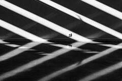 ... Reflejos, convergencias y refracciones  ... (Lanpernas 3.0) Tags: tabakalera sombras luces abstracto luz convergencias refracciones reflejos byn