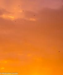 Flying In An Orange Sky (M C Smith) Tags: birds orange pentax k3ii negativespace clouds