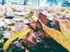 #tumbrl #autumn #colors 🍂🍃🍁 (ievaŽalnieraitytė) Tags: tumbrl colors autumn