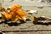 Herbst (jogi197) Tags: laubbaum deutschland daheim herbst europa garten blatt gehoelz ahorn leonberg