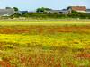 Champs fleuri près de Cayeux sur mer somme picardie (roland.grivel) Tags: fleurs cayeuxsurmer somme 80 picardie prairie manche coquelicots
